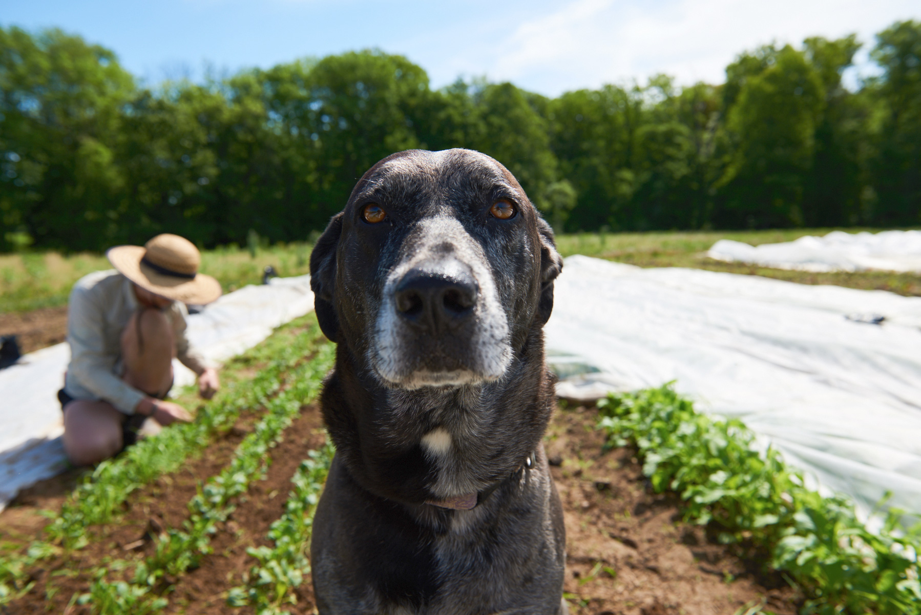 web_farmdog